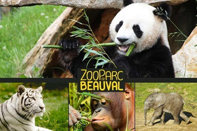 zooparc-beauval-pas-cher