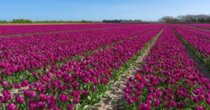 La fête des fleurs en Bretagne