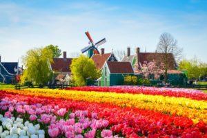 La Fine Fleur des Pays Bas
